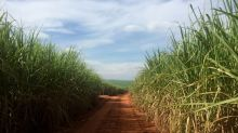 Brazil sugar production up 55% in May; ethanol sales recover