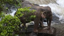 11 elephants died in plunge from waterfall while trying to save drowned calf