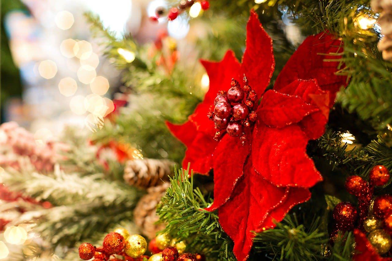 Albero Di Natale Yahoo.Tendenze Alberi Di Natale 2019