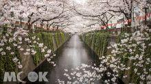 櫻花不再只能看!東京體驗式旅行提案