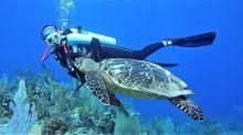 Girl has magical encounter with critically endangered sea turtle