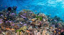 Coral reefs could stop growing in 10 years unless greenhouse gases are significantly reduced, new study says