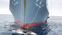 World body moves to curtail Japan's 'science' whaling