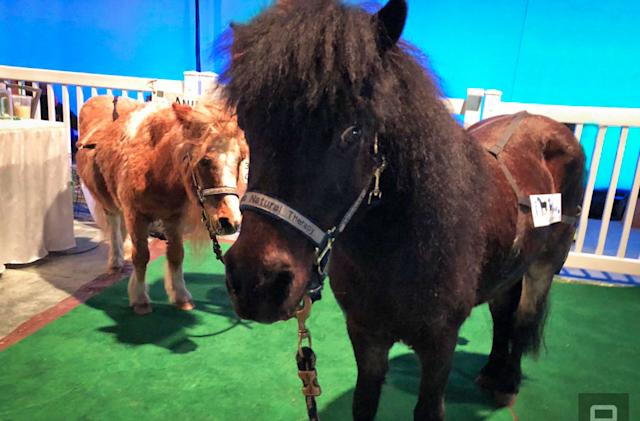 Miniature horses were the best thing at Build 2018