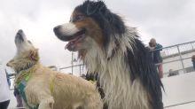 Badespaß: Poolparty für Hunde
