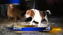 Family saves dogs from pack of coyotes