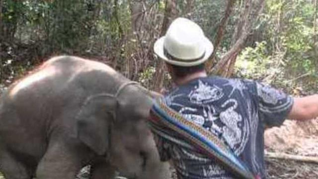 Friendly Elephant Likes to Dance