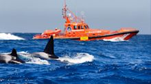 Spanish coast guard declares out-of-bounds zone after killer whales attack yachts