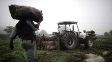 El IICA dice que Latinoamérica puede brindar seguridad alimentaria al mundo