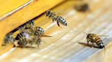 Beekeeping is teaching corporate employees 'how to be effective leaders'