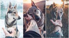 【相集】「狗狗版」#FollowMeTo放閃相 遊山玩水超有愛