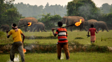 Distressing moment elephants firebombed by villagers trying to save crops