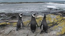 Falklands Oil Boom on Ice After Crude Price Slump