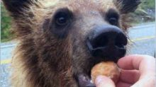 Two charged over allegations they fed bears along B.C.'s Alaska Highway