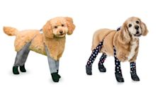 Dog leggings exist and they're sure to make a stylish Christmas present
