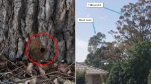 'Heartbreaking': Sinister reason for drill holes in tree trunks