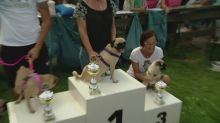 Pugs race it out for title of Berlin's fastest