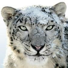 What Snow Leopard feature are you anticipating the most?