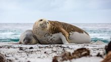 Residents of the tiny Falkland Islands offered £500 to take a staycation