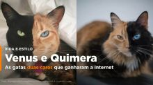 Venus e Quimera, as gatas duas caras