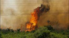 Zahl der Waldbrände im brasilianischen Sumpfgebiet Pantanal dramatisch gestiegen