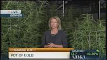 Rocky Mountain high... tracking pot from seed to sale