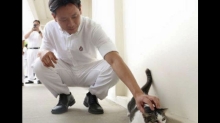 MP Louis Ng: I will continue pushing for allowing cats in HDB flats
