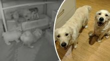 Cheeky pups break into toddler's room in hilarious time-lapse