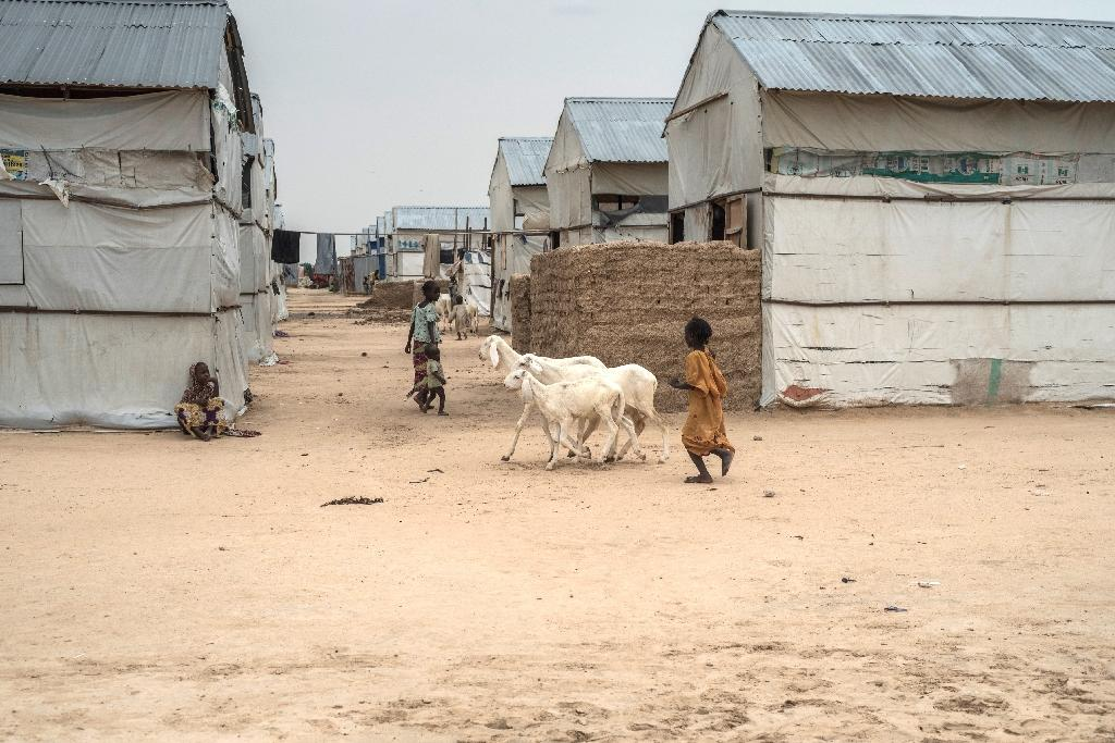 A young girl herds goats through the temporary shelters at the Bakasi Internally Displaced People camp in Maiduguri, where Bama residents have fled to escape Boko Haram violence
