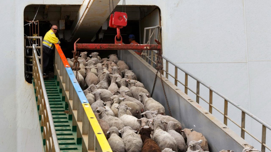 Tour a first for WA live export industry