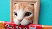 貓奴最愛的藝術品 擠出框的可愛貓咪