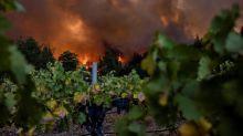 Californie: les vignobles de Napa ne résistent pas aux flammes