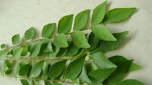 The Many Health Benefits of Curry Leaves