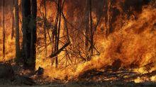 Científicas ilustran a un necio usuario sobre el cambio climático y los incendios en Australia
