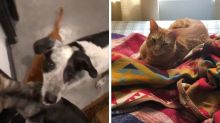 A Cat And Two Dogs Almost Got Away With An Adorable Home Invasion