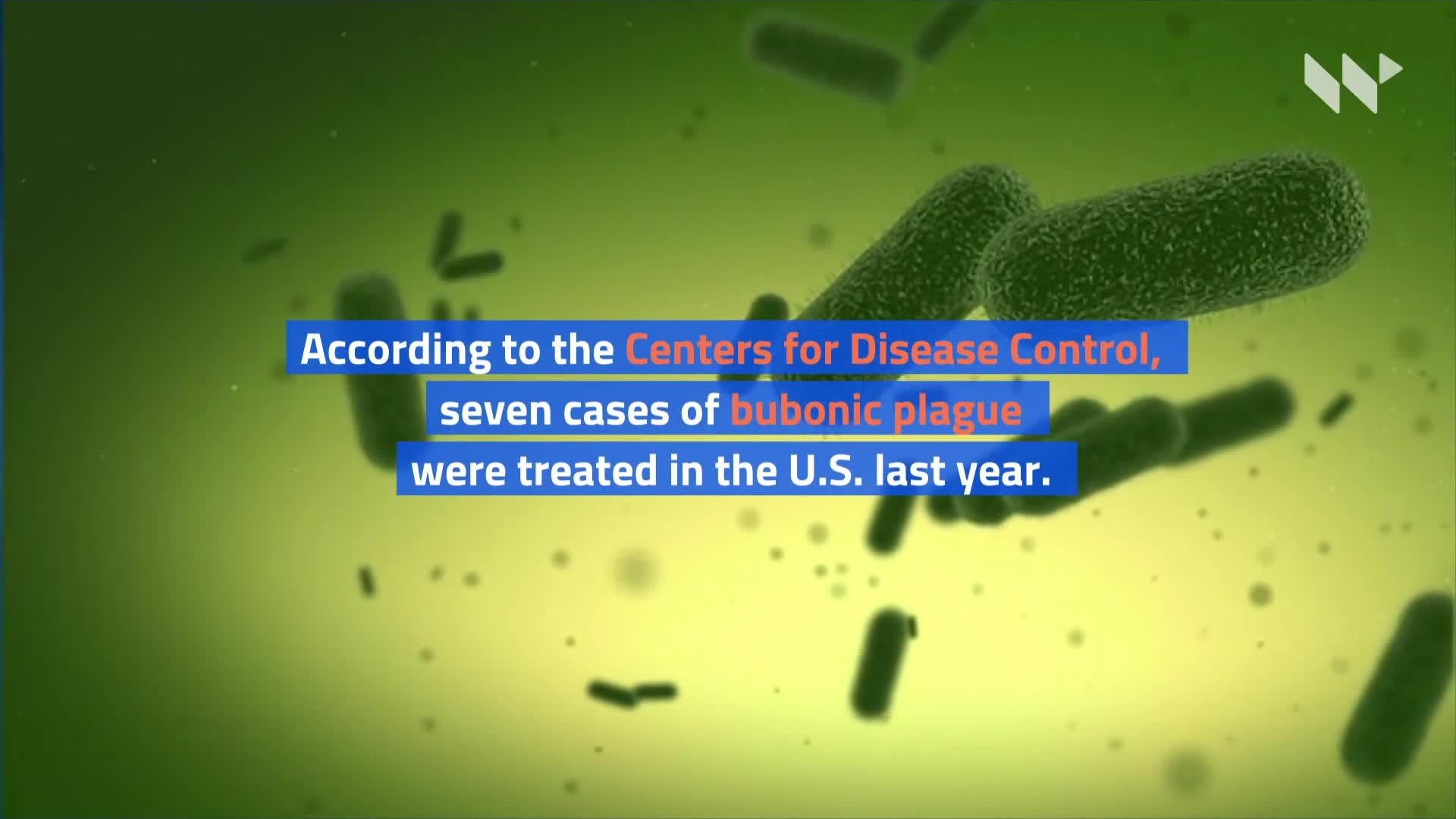 Bubonic Plague Case in Inner Mongolia Confirmed by China ...