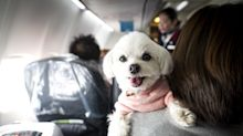 Southwest Airlines limits emotional support animals to cats and dogs. Pigs on no-fly list.