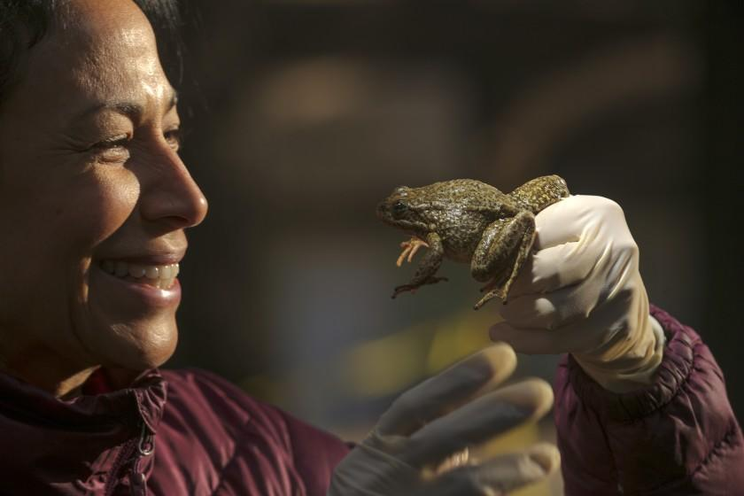 Rescue operations underway in the San Gabriel Mountains for rare species marooned by wildfire