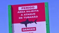 World Cup Fans on Alert at Shark-filled Beaches
