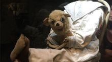 Meet the most haunted doll in the world