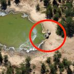 Hundreds of elephants in Botswana are mysteriously dropping dead next to watering holes