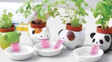 Best gifts for gardeners: The gadgets, tools and accessories for green-fingered friends