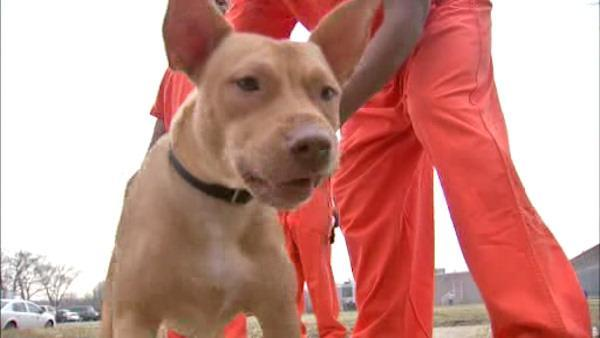 Inmates make difference with new best friends