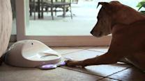 High score, good dog! CleverPet makes the first canine game console, Ep. 159