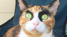 This cat will totally judge you with her amazing eyebrows