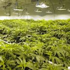 Scotts Miracle-Gro Forecasts Its Marijuana Support Business Will Grow Sales 30% to 40% in 2021