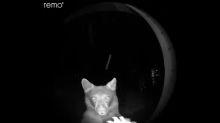 VIDÉO - Quand un ours vient sonner à la porte d'une maison en pleine nuit