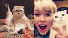 Fans love the brilliant way Meredith and Olivia are a part of Taylor Swift's 'Cats' casting