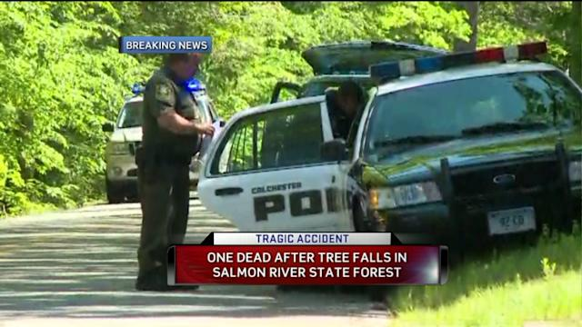 One Killed By Falling Tree In Colchester