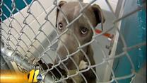 Wake forced to send pets to Charlotte